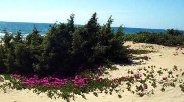duna-fiorita